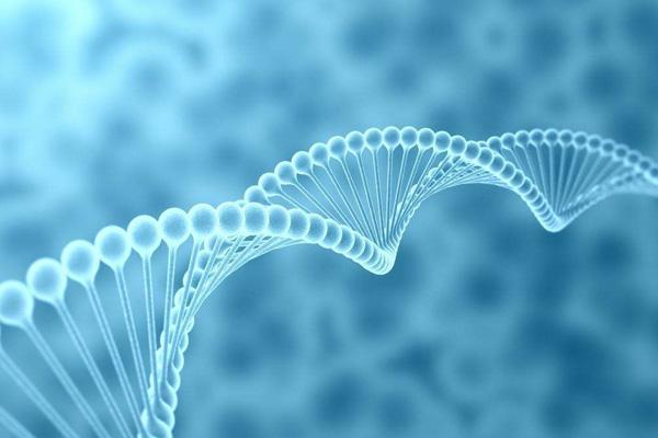 BIOG组织DNA抽